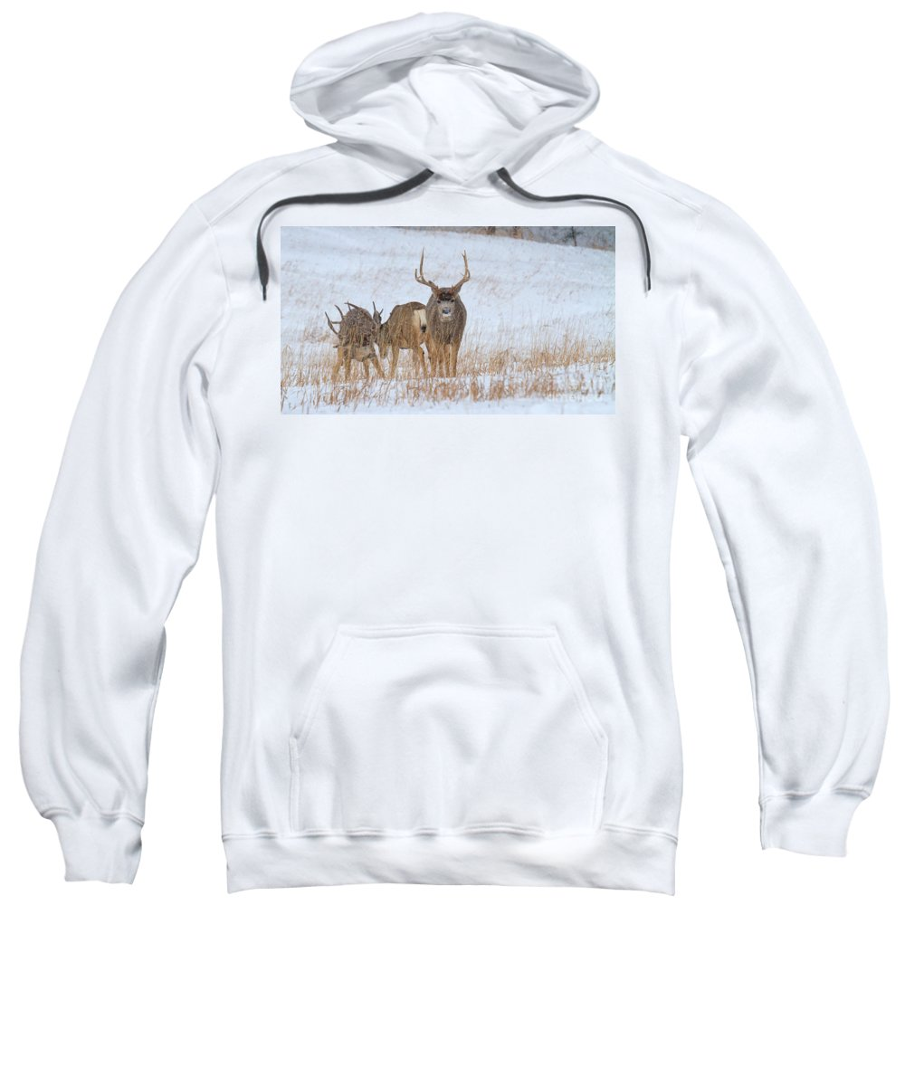 Mule Deer Buck Sweatshirt featuring the photograph Walk Away by Jim Garrison
