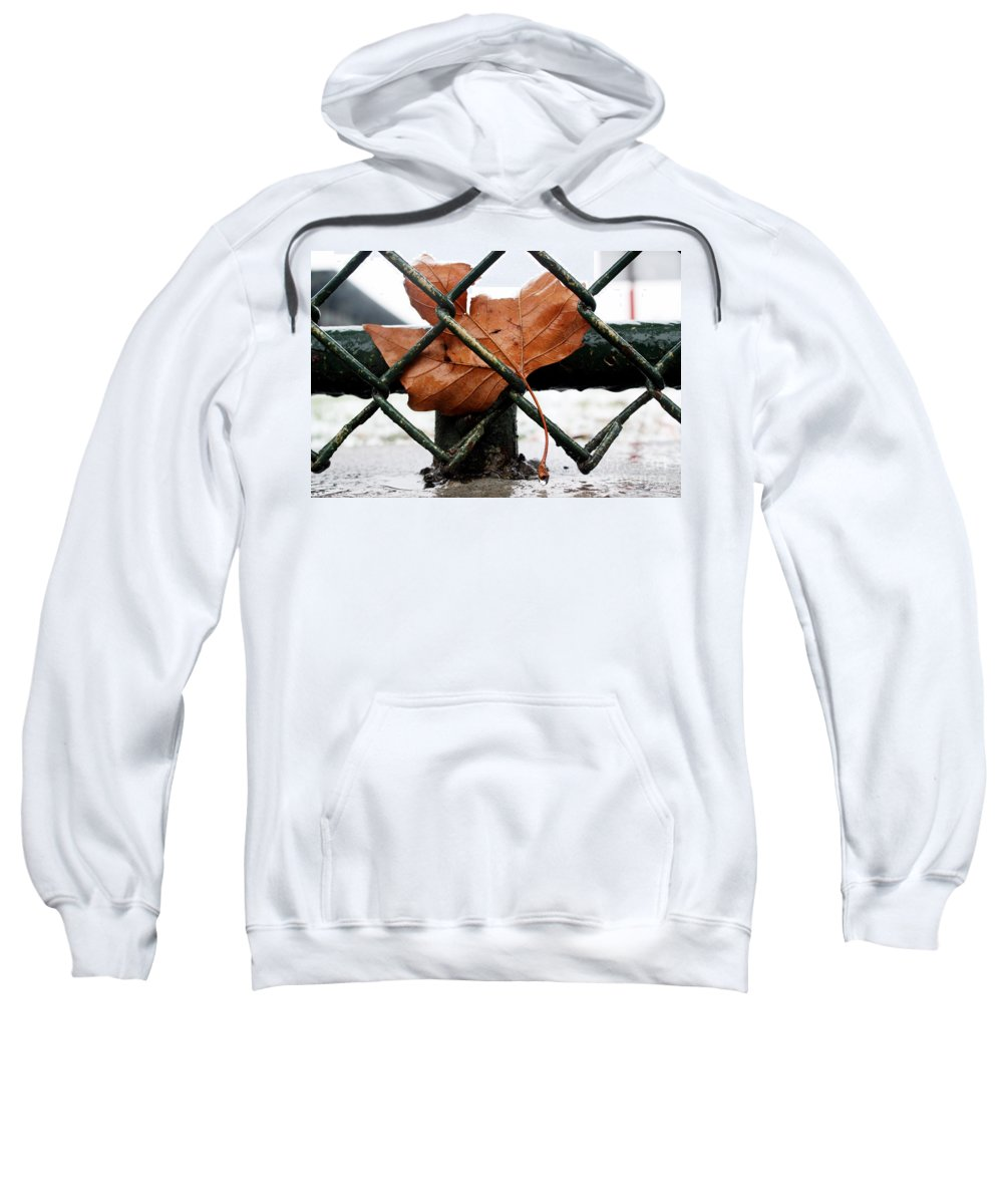 Water Sweatshirt featuring the photograph Water Leaf by Mark Ashkenazi