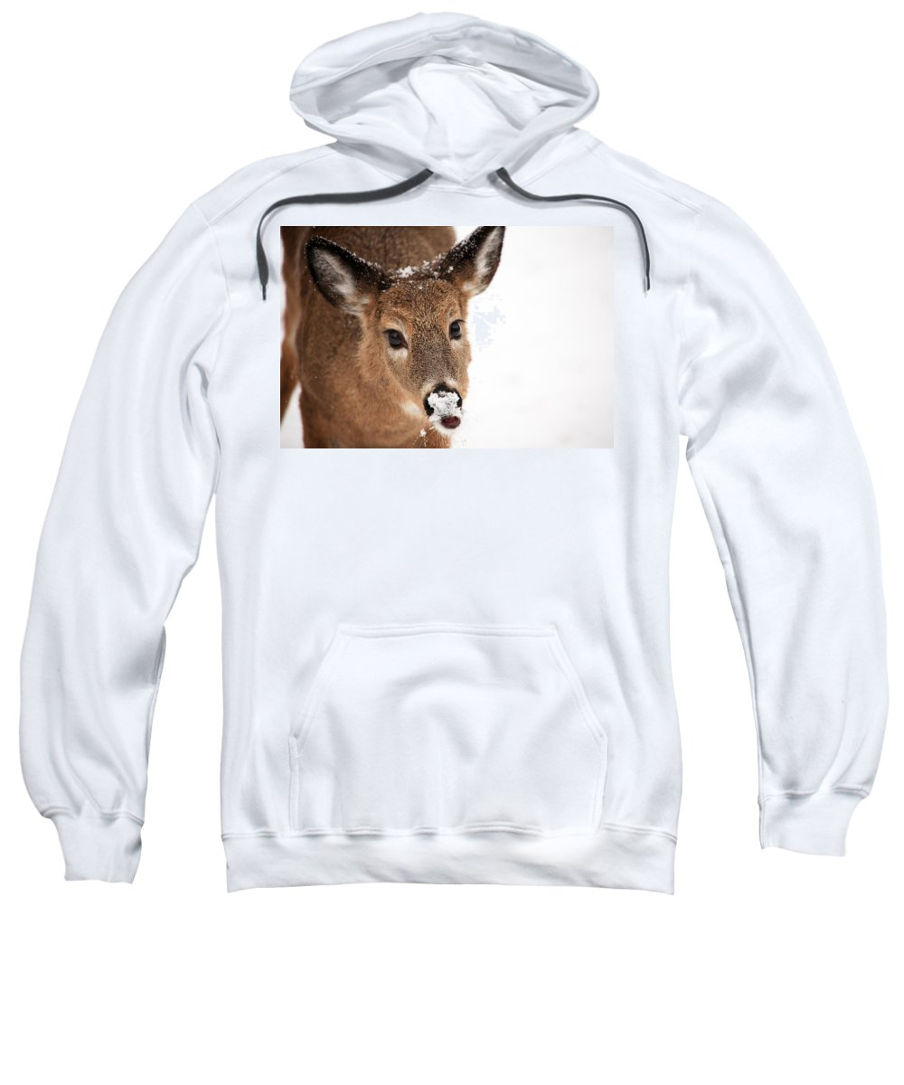 Deer Sweatshirt featuring the photograph White On The Nose by Karol Livote