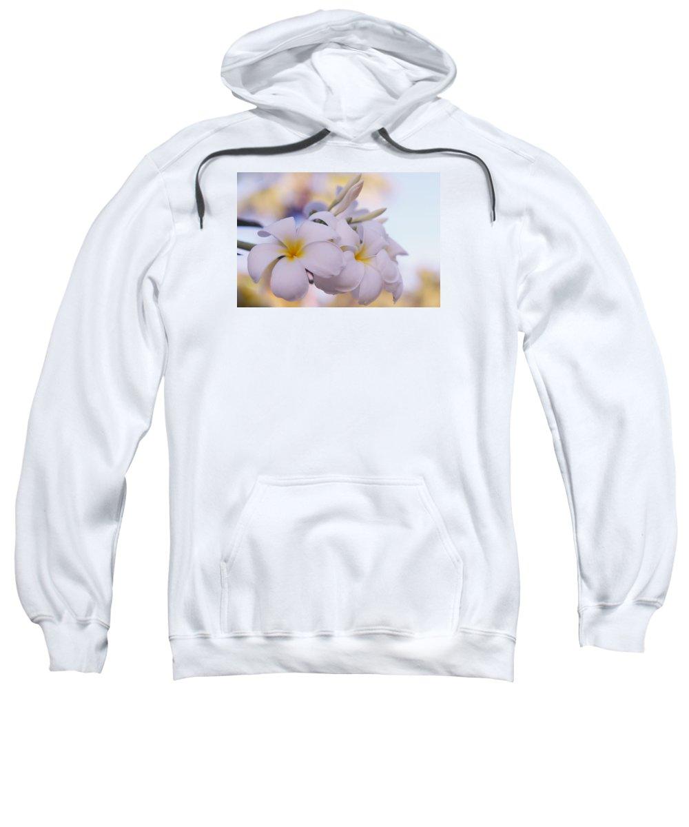 Jenny Rainbow Fine Art Photography Sweatshirt featuring the photograph White Snow Frangipani Flowers by Jenny Rainbow