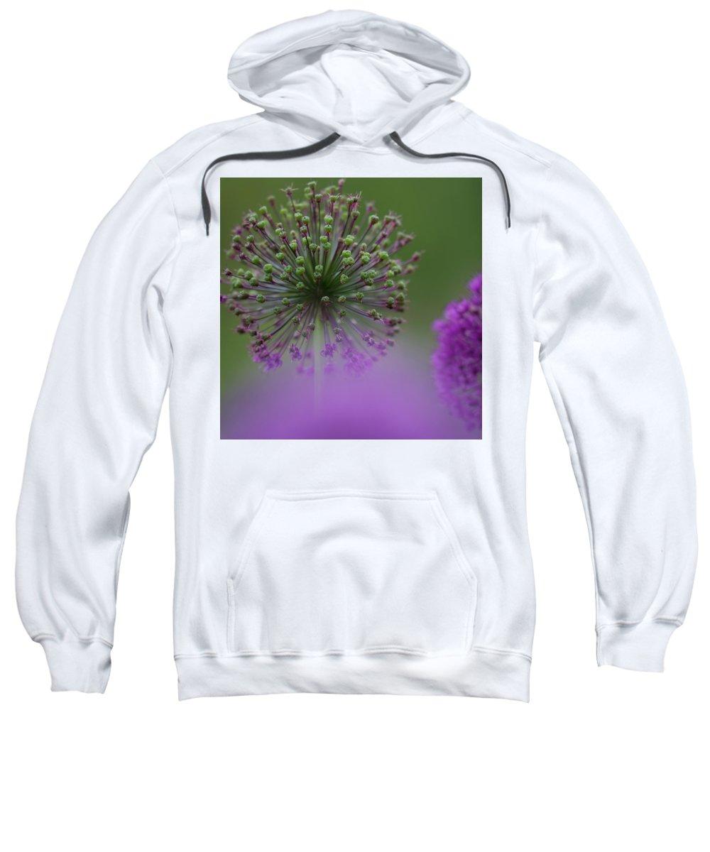 Allium Sweatshirt featuring the photograph Wild Onion by Heiko Koehrer-Wagner