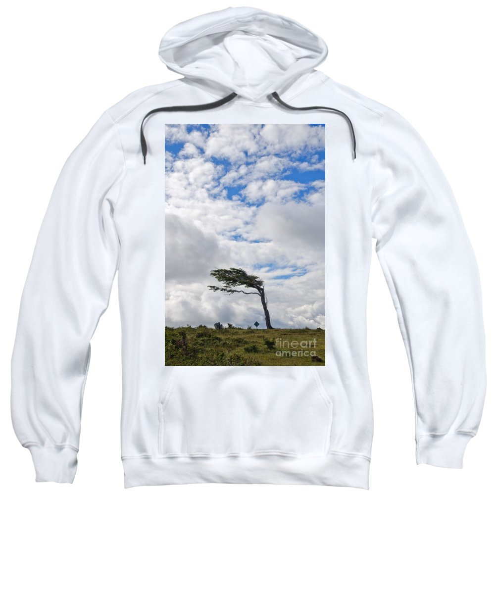 Sky Sweatshirt featuring the photograph Wind-bent Flag Tree In Tierra Del Fuego by Ralf Broskvar