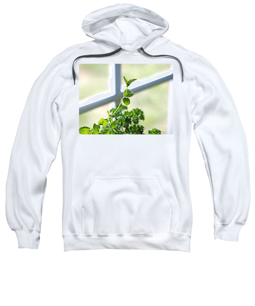 Herbs Sweatshirt featuring the photograph Window Herb Garden by Candy Frangella