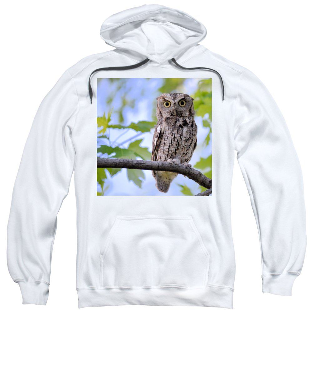Screech Owl Sweatshirt featuring the photograph Wise Old Owl by Bonfire Photography