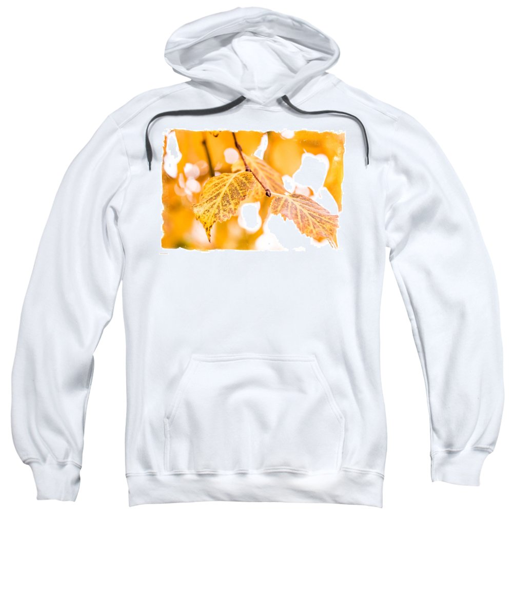 Yellow Sweatshirt featuring the photograph Yellow Autumn by Mick Anderson