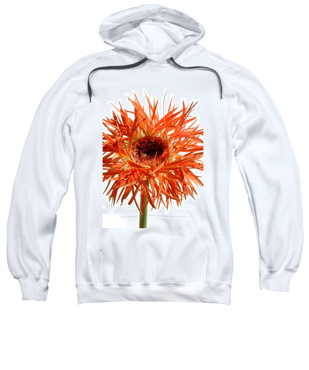 Gerbera Photographs Sweatshirt featuring the photograph 0687c-021 by Kimberlie Gerner