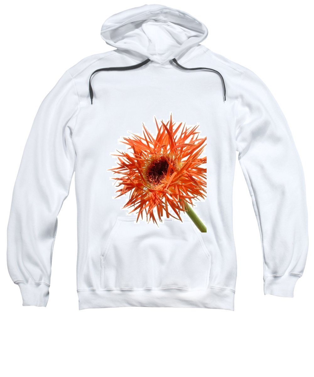 Gerbera Photographs Sweatshirt featuring the photograph 0688c-010 by Kimberlie Gerner