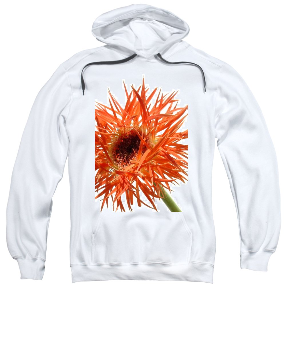 Gerbera Photographs Sweatshirt featuring the photograph 0688c-017 by Kimberlie Gerner