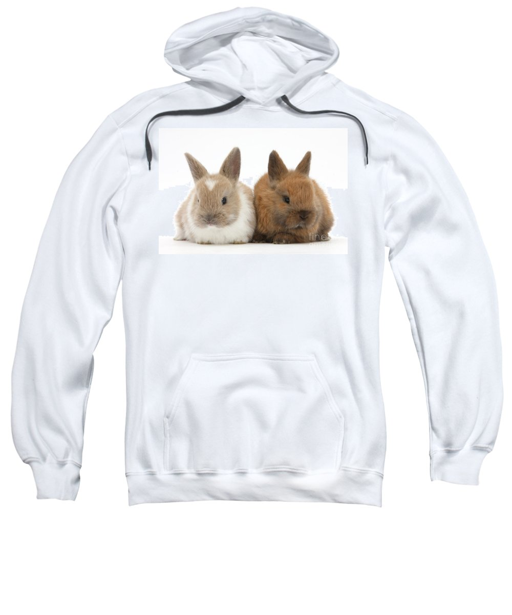 Nature Sweatshirt featuring the photograph Baby Rabbits by Mark Taylor