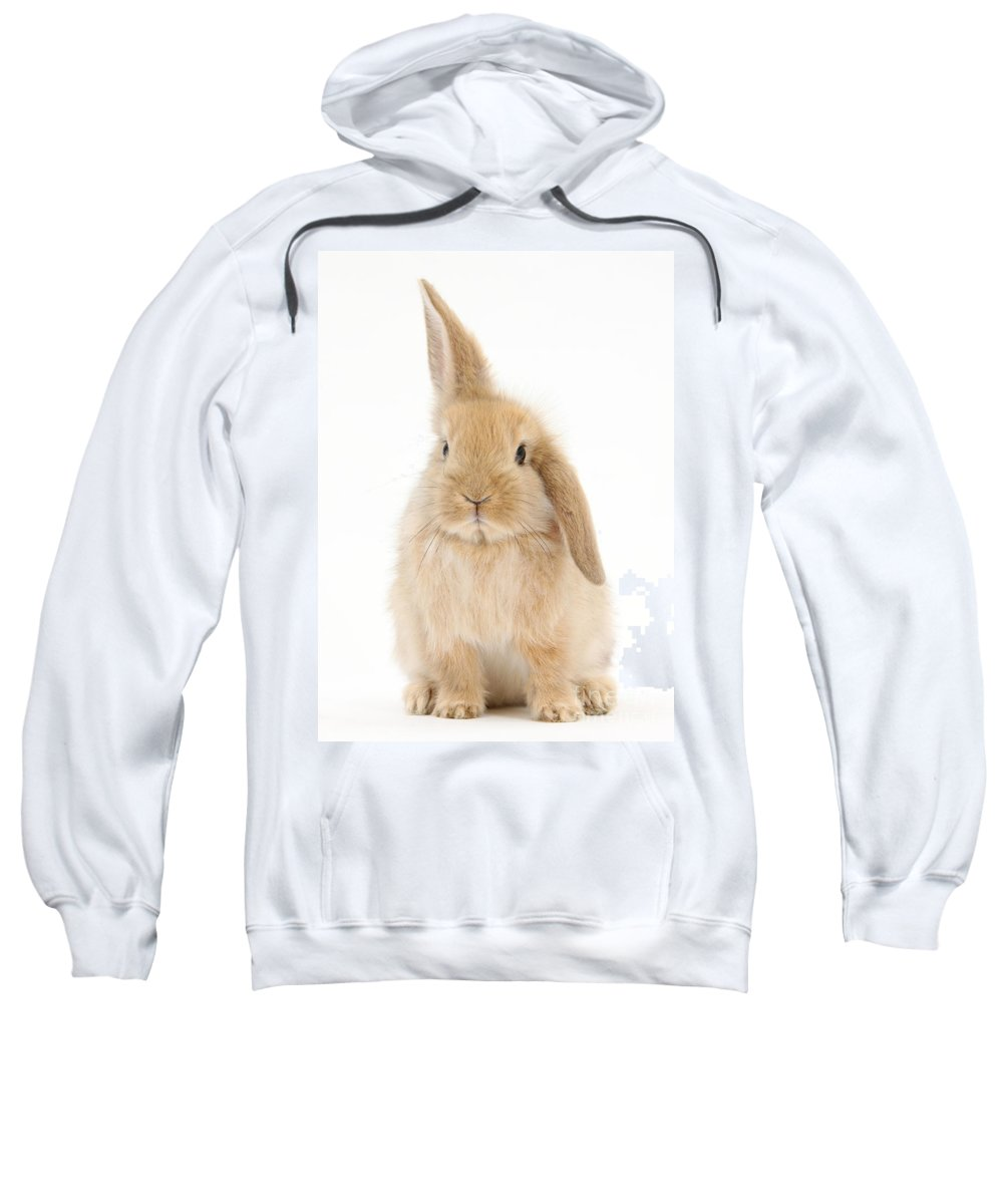Animal Sweatshirt featuring the photograph Baby Sandy Lop Rabbit by Mark Taylor