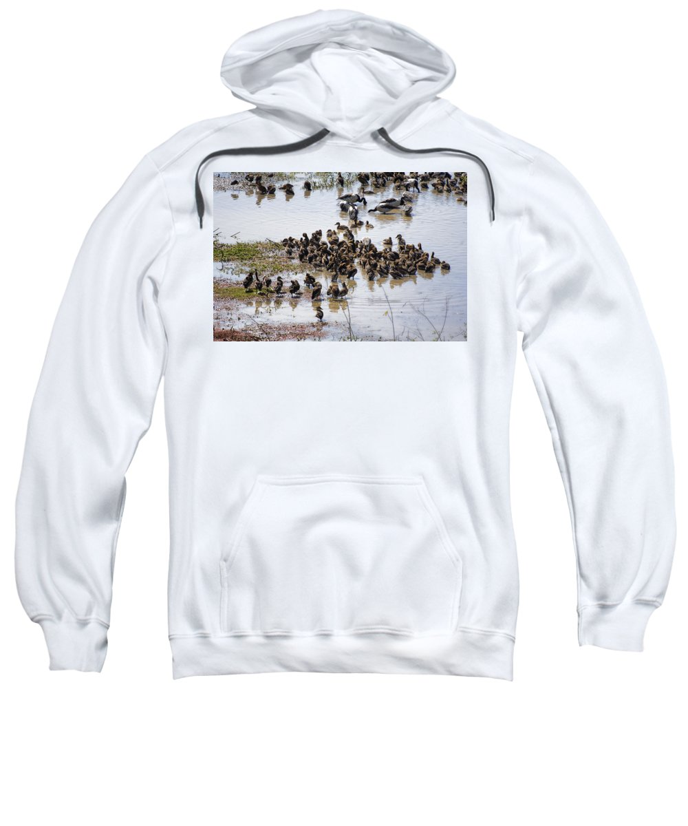 Whistling Ducks And Magpie Geese Sweatshirt featuring the photograph Birds Of A Feather by Douglas Barnard