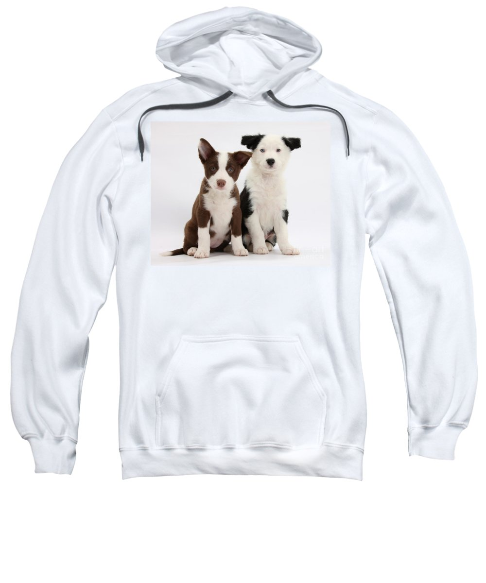 Animal Sweatshirt featuring the photograph Border Collie Puppies by Mark Taylor