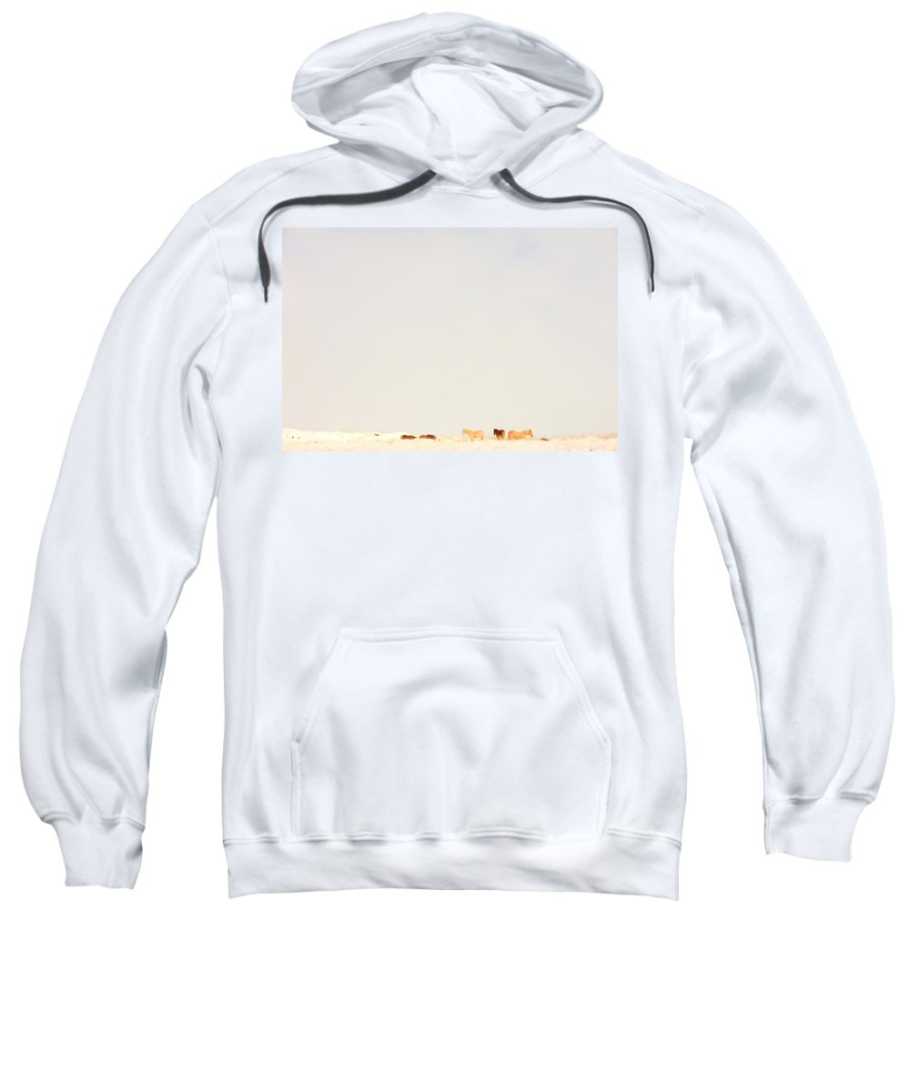 Light Sweatshirt featuring the photograph Icelandic Horses In Snow Covered Field by Robert Postma