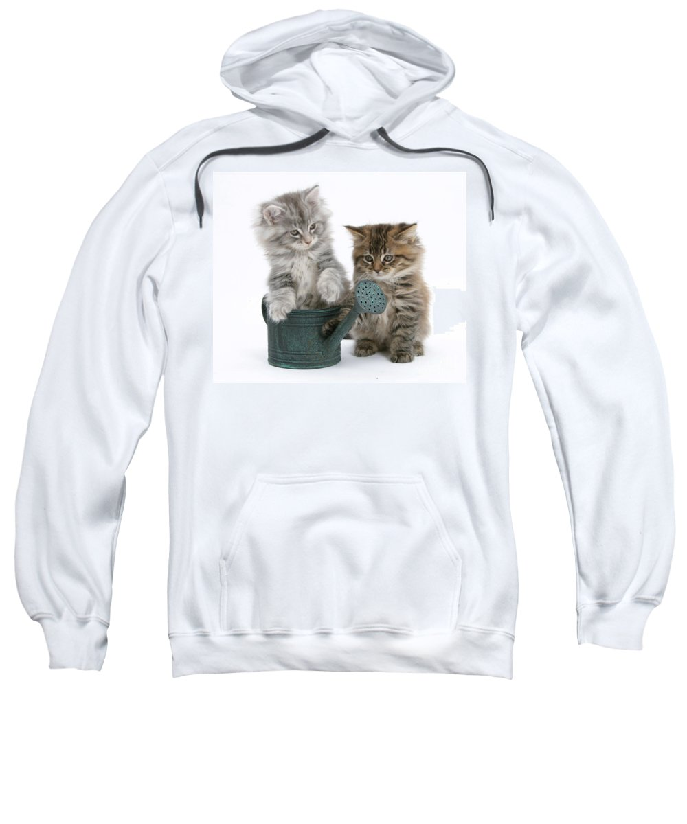 Animal Sweatshirt featuring the photograph Maine Coon Kitttens by Mark Taylor