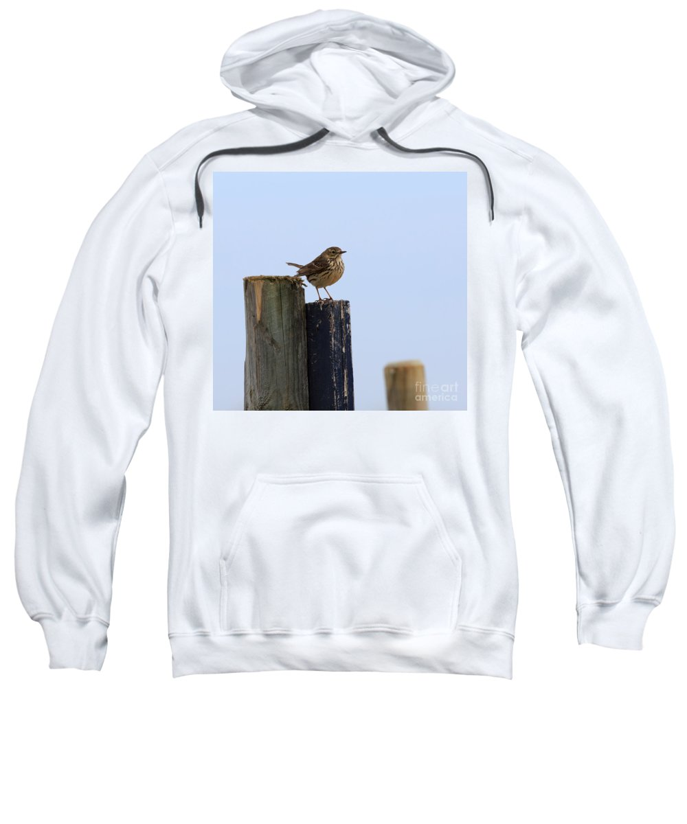 Meadow Sweatshirt featuring the photograph Meadow Pipit by Louise Heusinkveld