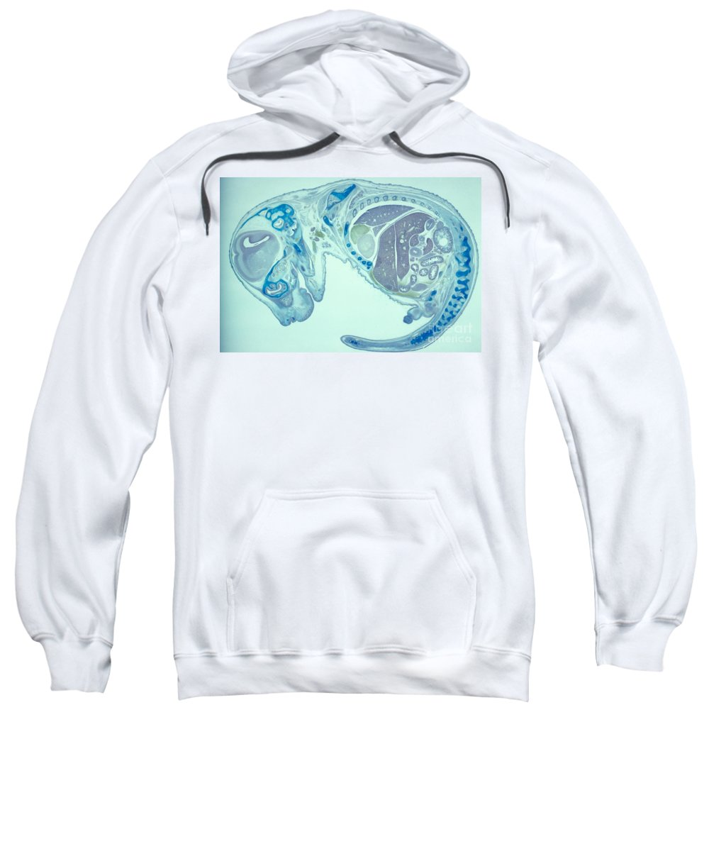 Embryo Sweatshirt featuring the photograph Mouse Embryo by M. I. Walker