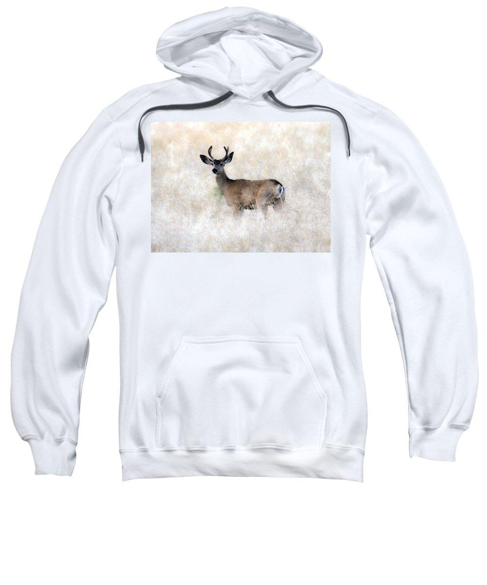 Mule Deer Buck Sweatshirt featuring the photograph Mule Deer Buck by Steve McKinzie