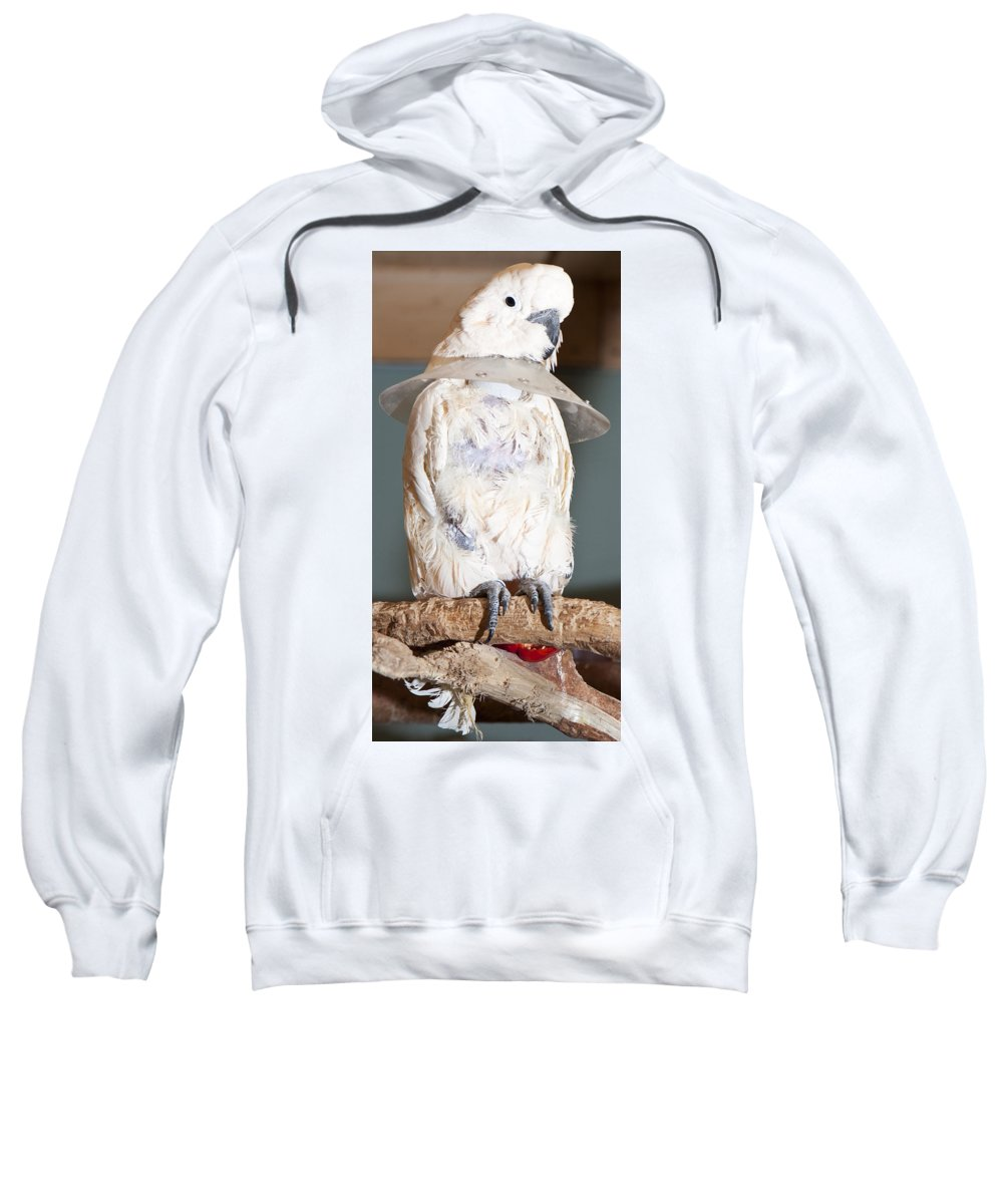 Photography Sweatshirt featuring the photograph Parrot White by Steven Natanson