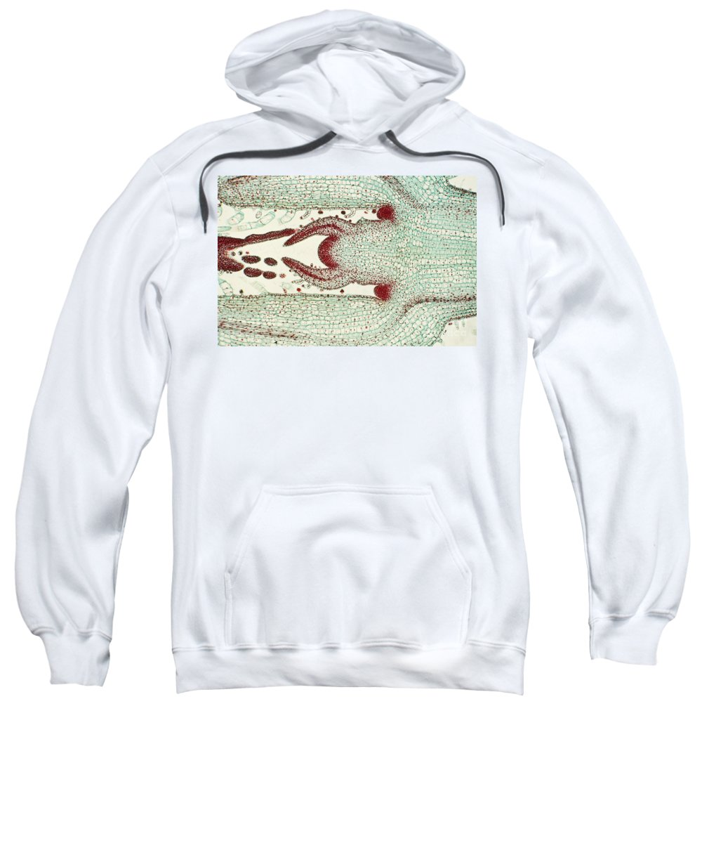 Science Sweatshirt featuring the photograph Plant Anatomy by M. I. Walker