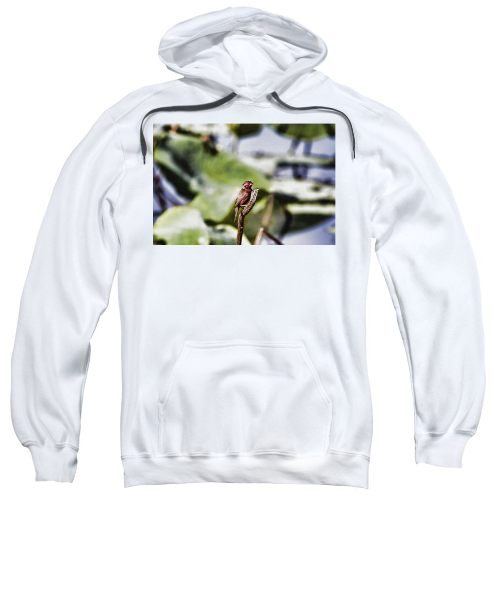 Red Finch Sweatshirt featuring the photograph Red Faced by Douglas Barnard
