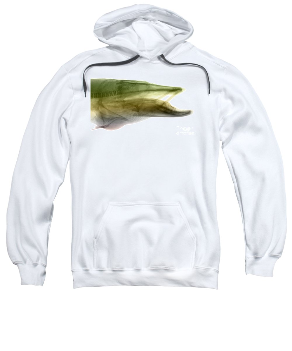 Xray Sweatshirt featuring the photograph X-ray Of Muskie by Ted Kinsman