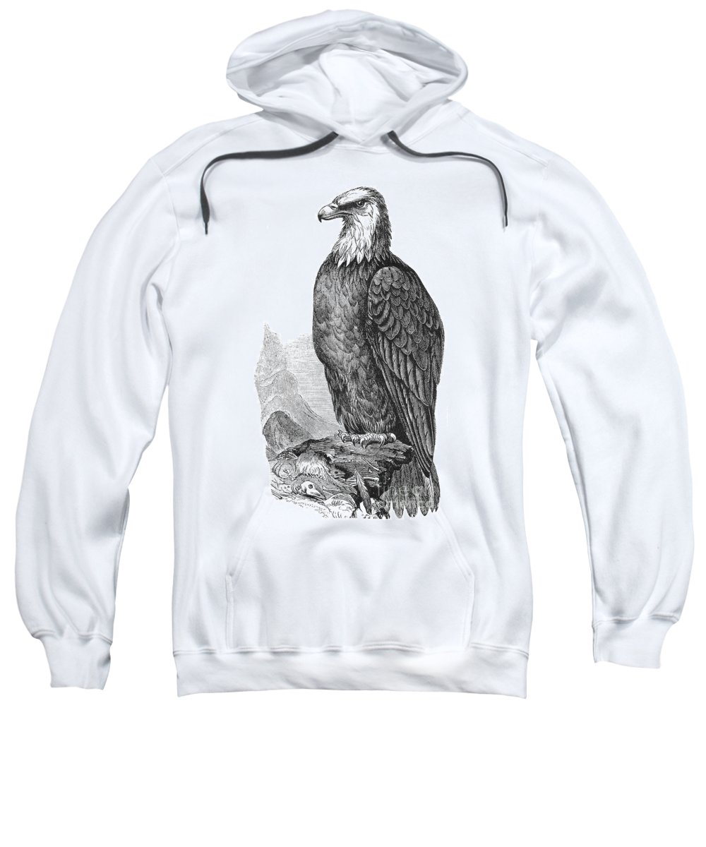 19th Century Sweatshirt featuring the photograph Bald Eagle by Granger