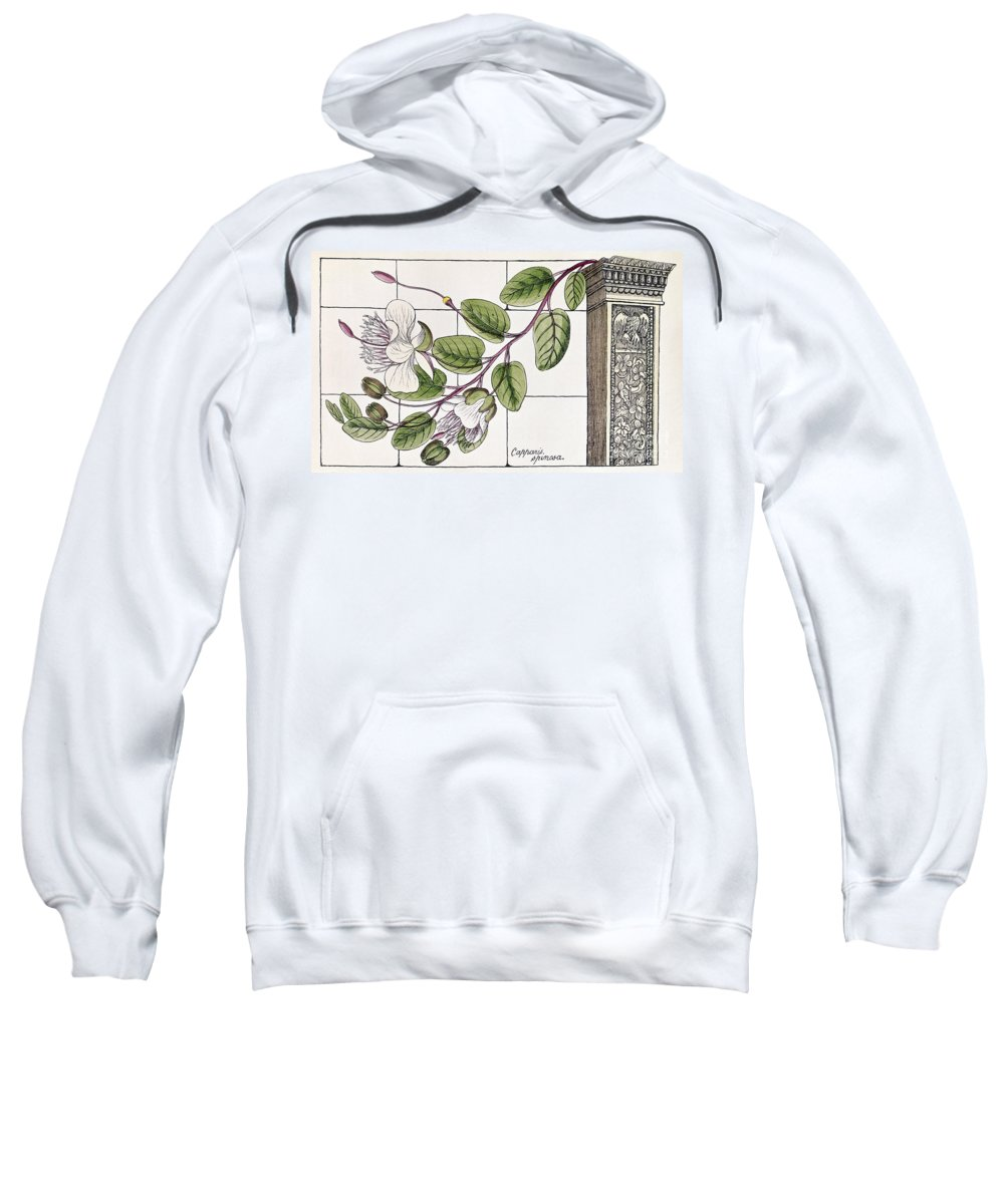 1855 Sweatshirt featuring the photograph Colosseum: Flower by Granger