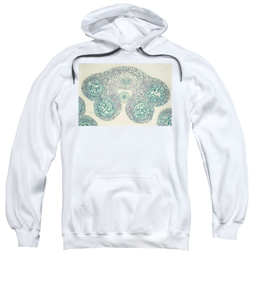 Science Sweatshirt featuring the photograph Lily Anther Lm by M. I. Walker