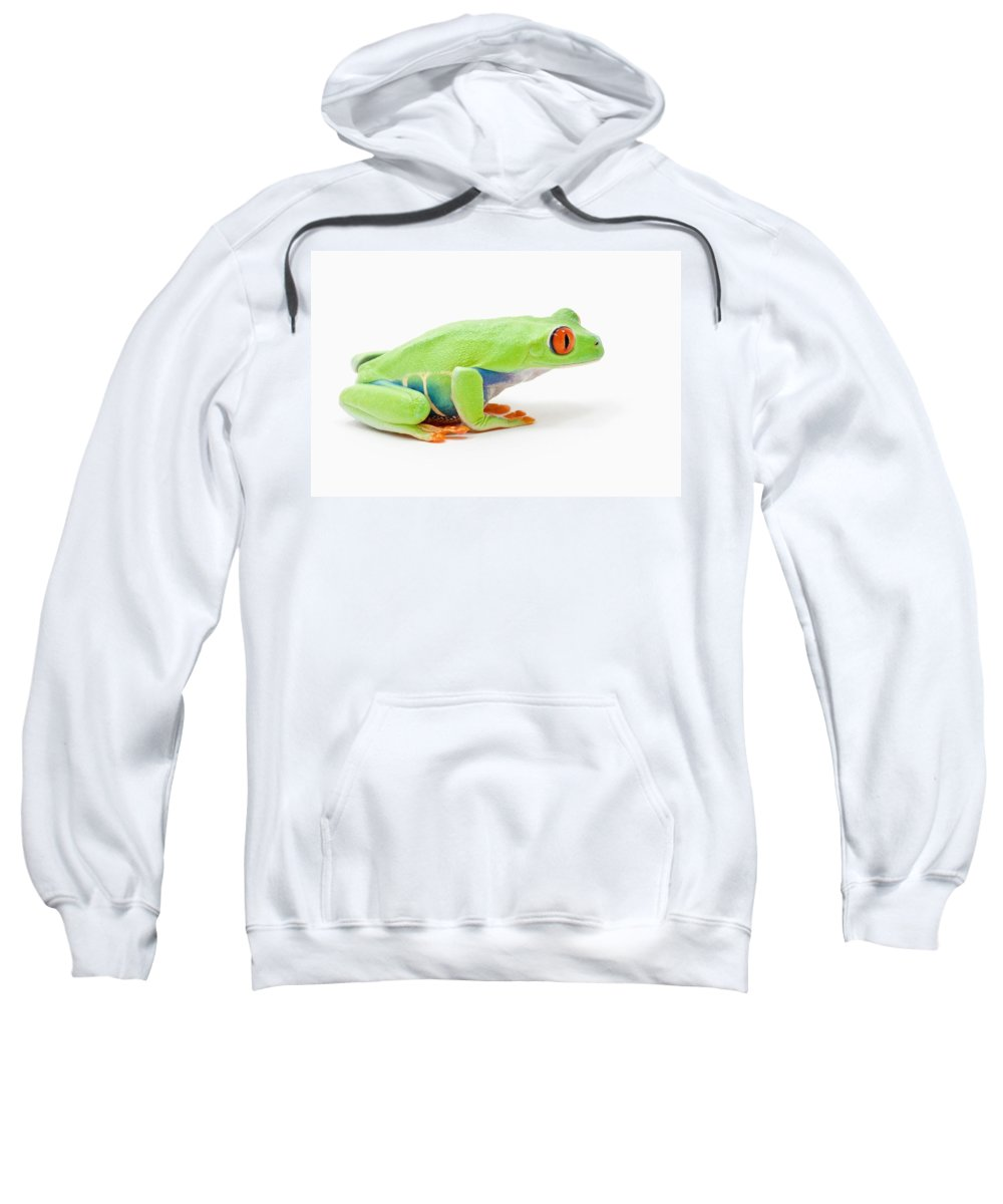 Alberta Sweatshirt featuring the photograph Red-eyed Tree Frog Agalychnis by Corey Hochachka