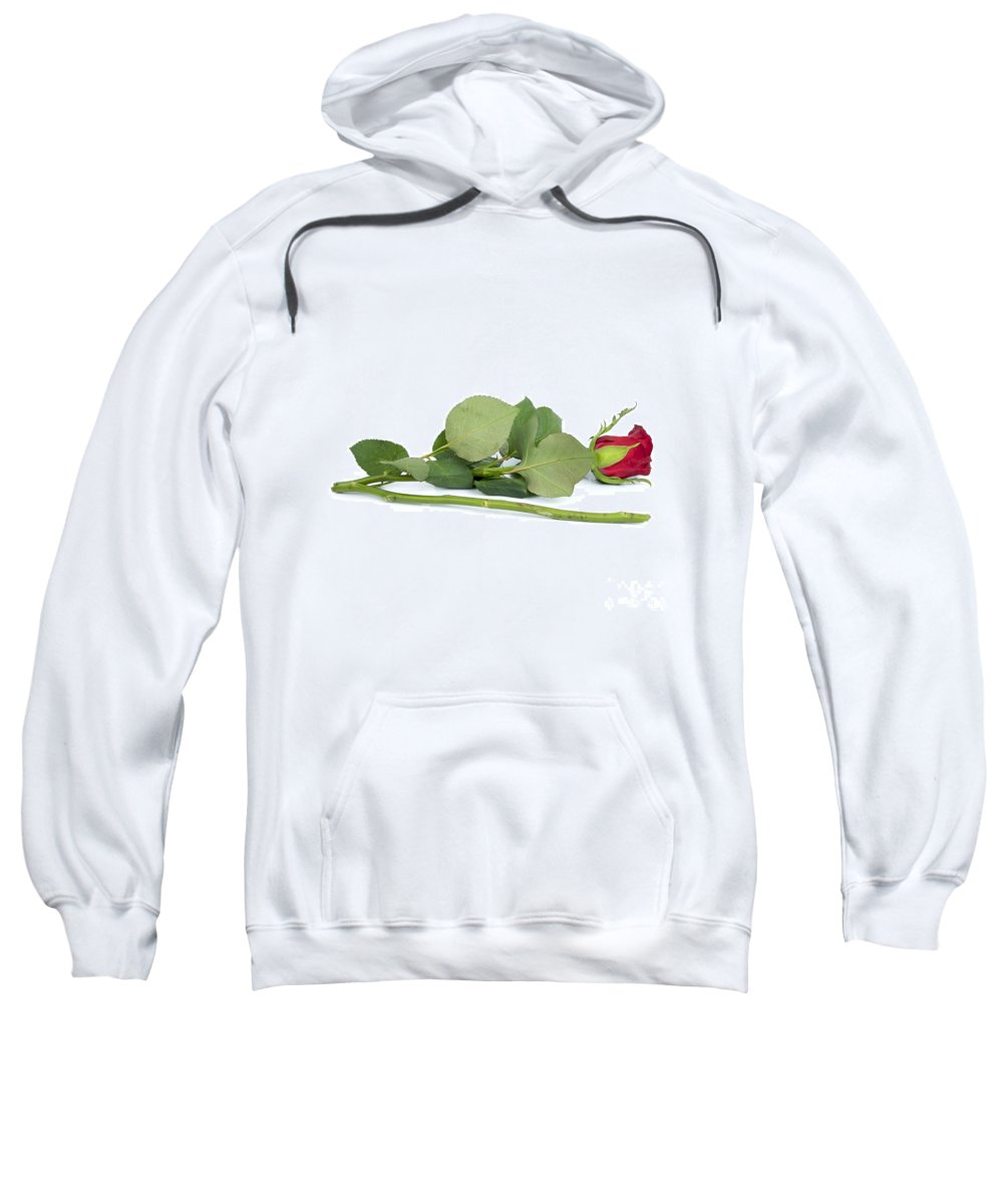 With Sweatshirt featuring the photograph Red Tulip by Bernard Jaubert