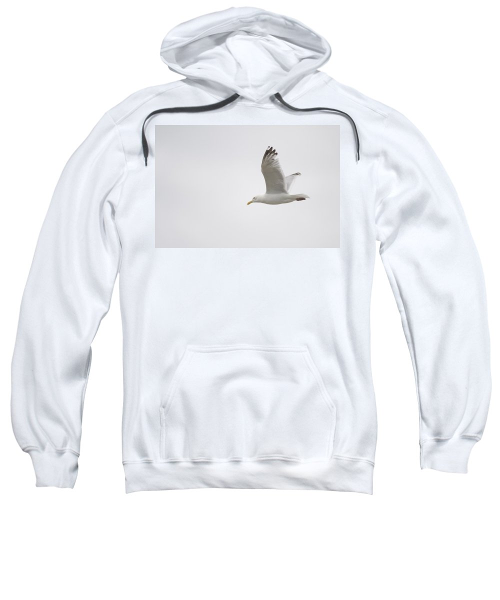 Bird Sweatshirt featuring the photograph Lake Of The Woods, Ontario, Canada by Keith Levit