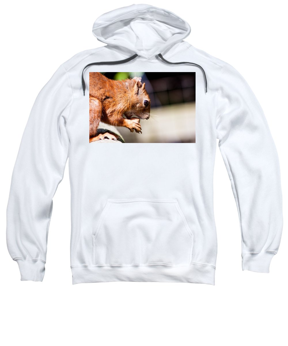 Red Squirrel Sweatshirt featuring the photograph Red Squirrel by Dawn OConnor