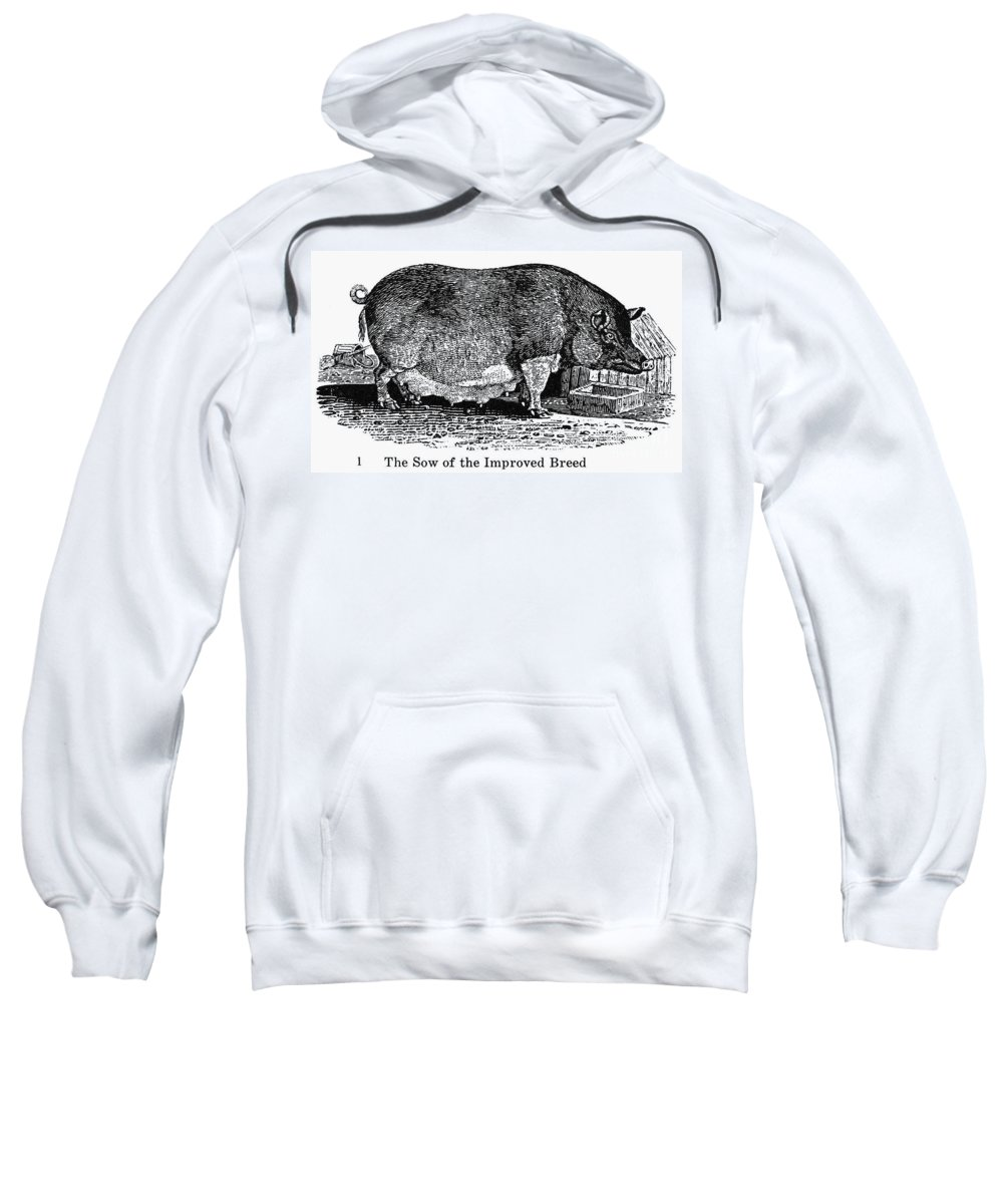 19th Century Sweatshirt featuring the photograph Swine, 19th Century by Granger
