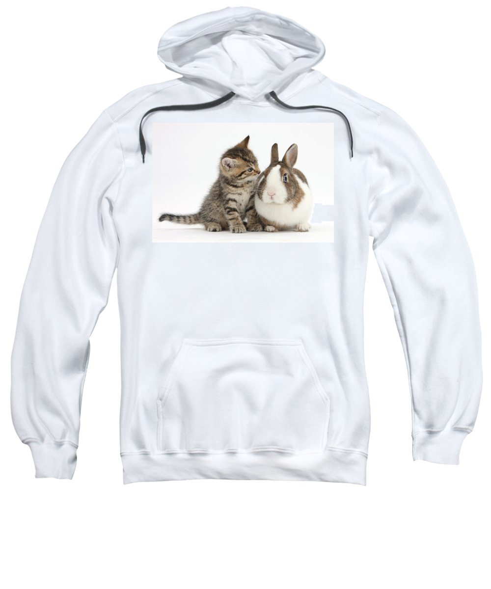 Nature Sweatshirt featuring the photograph Kitten And Rabbit by Mark Taylor