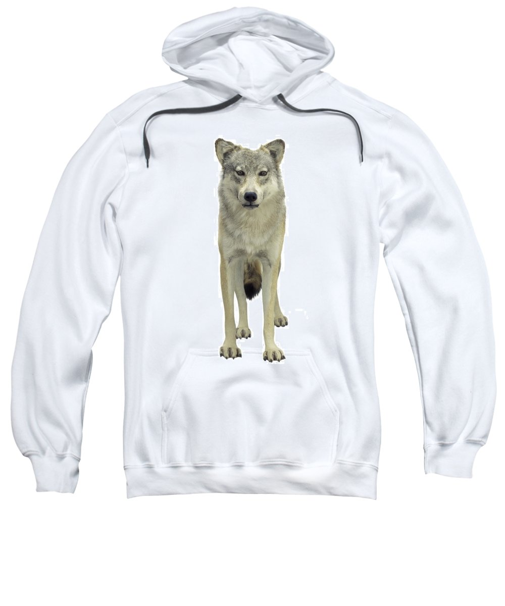 Animal Sweatshirt featuring the photograph A Wolf by Don Hammond