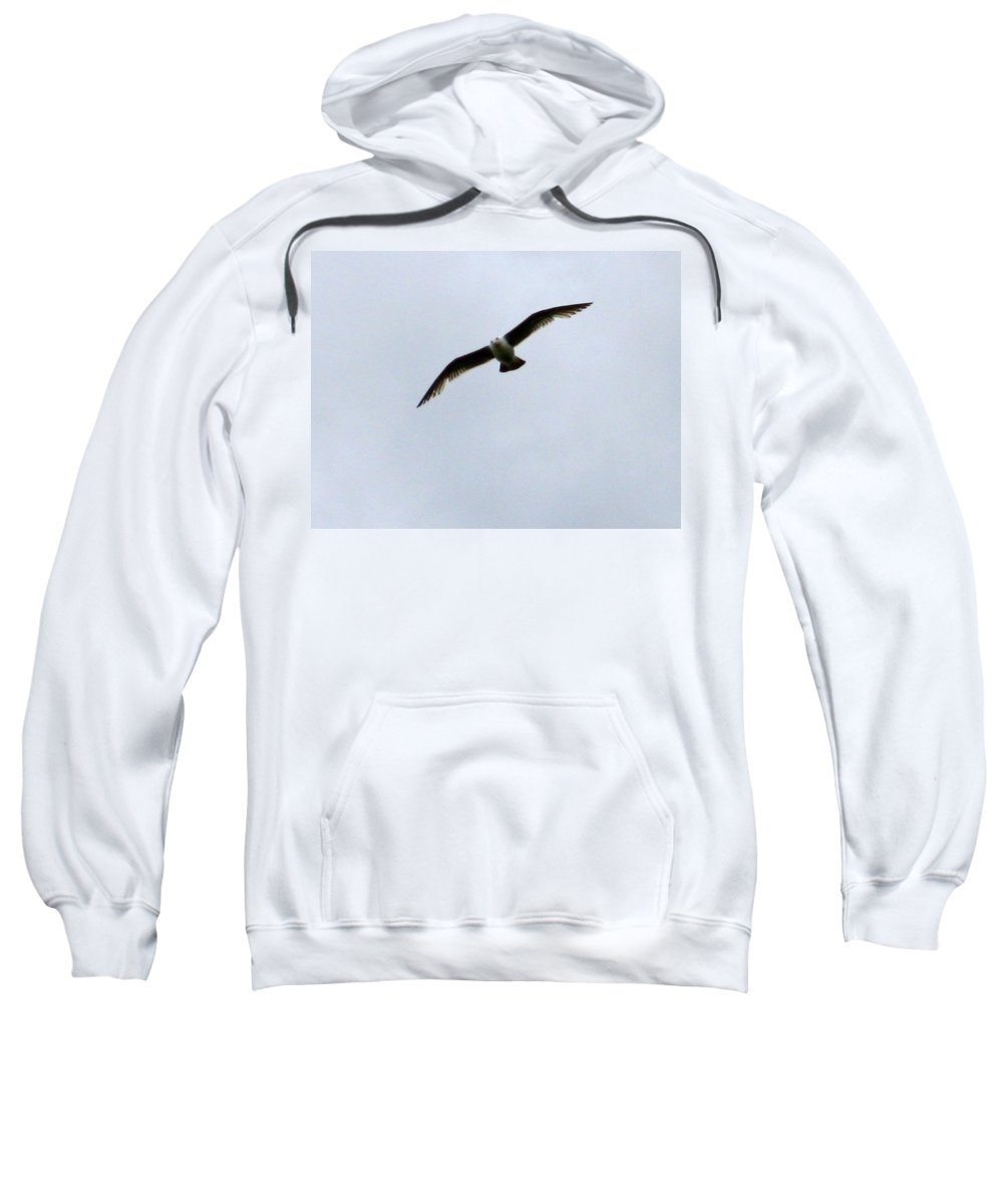 Seagull Sweatshirt featuring the photograph Airborne by Linda Hutchins