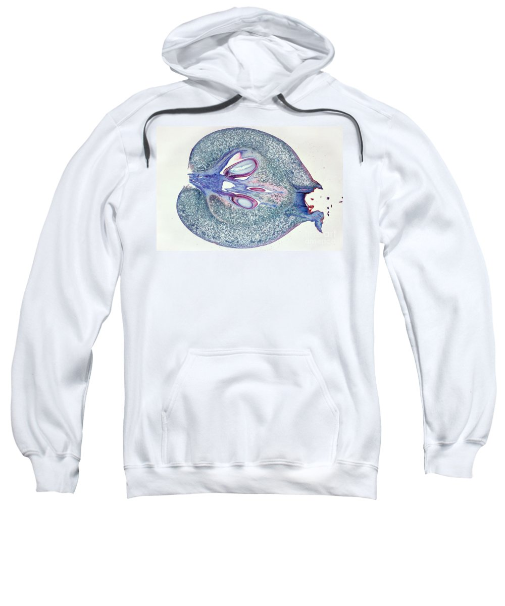 Science Sweatshirt featuring the photograph Apple Fruit Lm by M. I. Walker