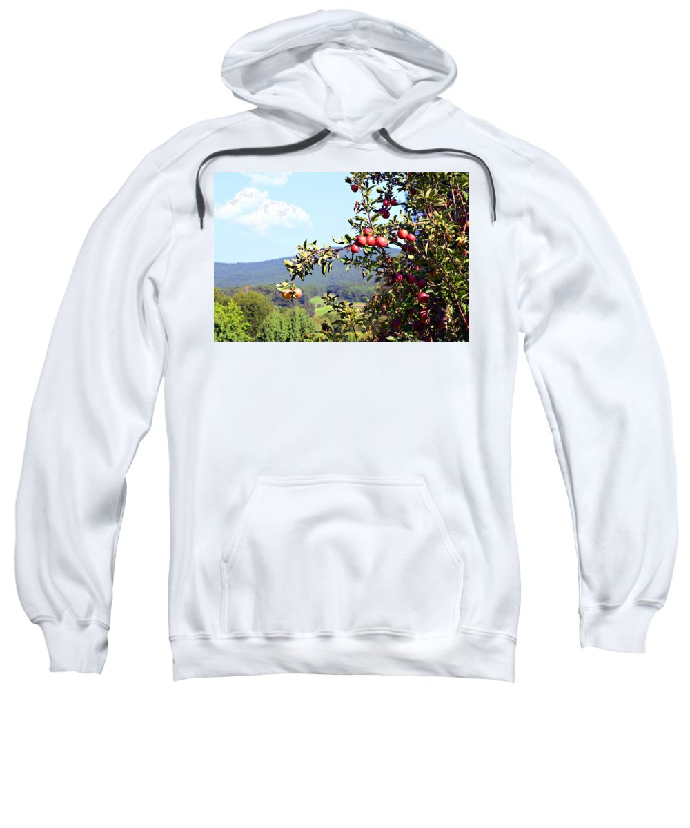 Apples Sweatshirt featuring the photograph Apples On A Tree by Susan Leggett