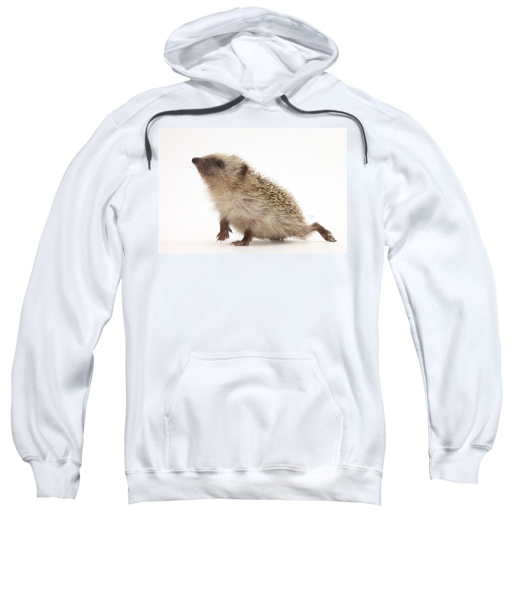 Hedgehog Sweatshirt featuring the photograph Baby Hedgehog by Mark Taylor