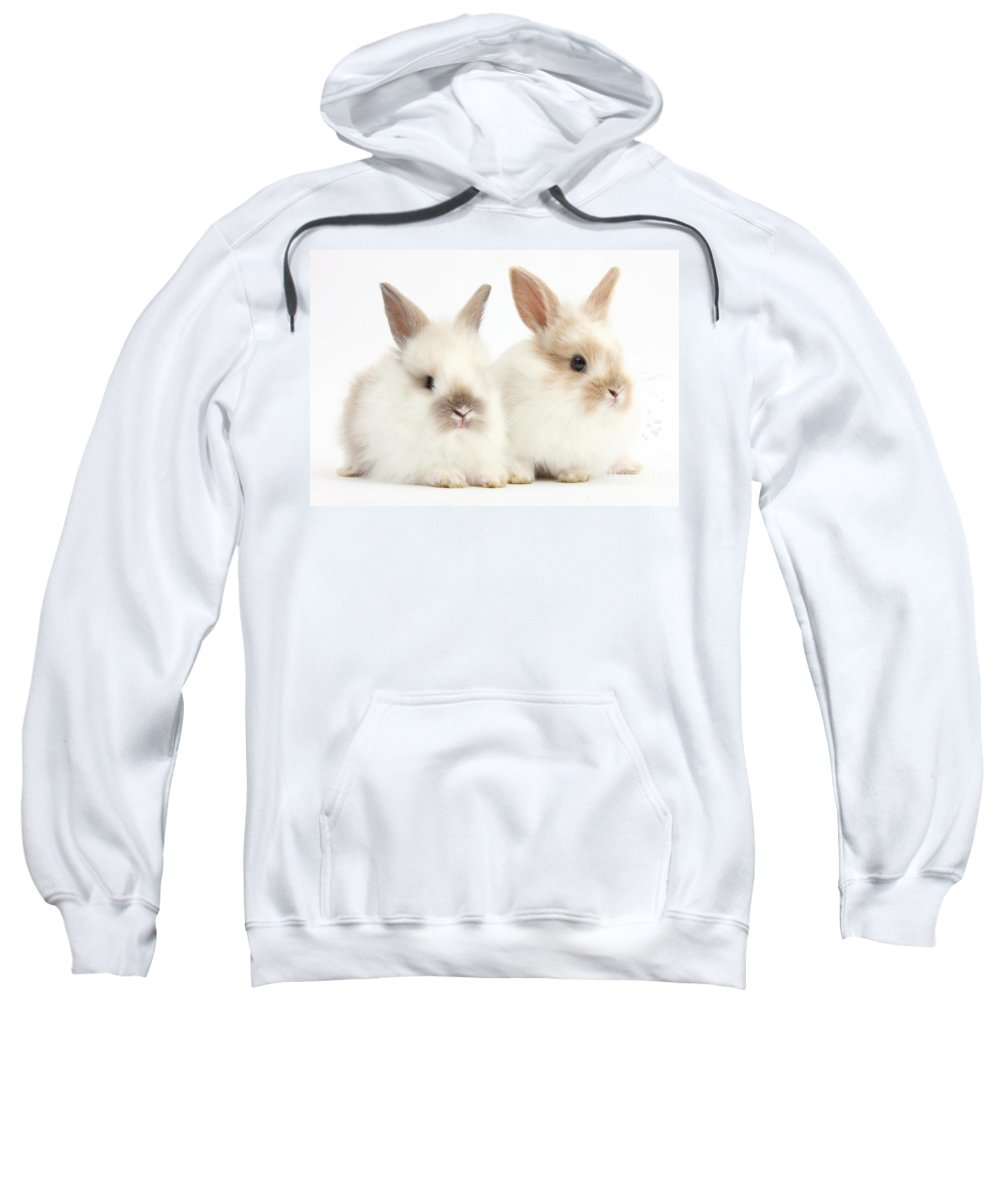 Nature Sweatshirt featuring the photograph Baby Lionhead-lop Bunnies by Mark Taylor