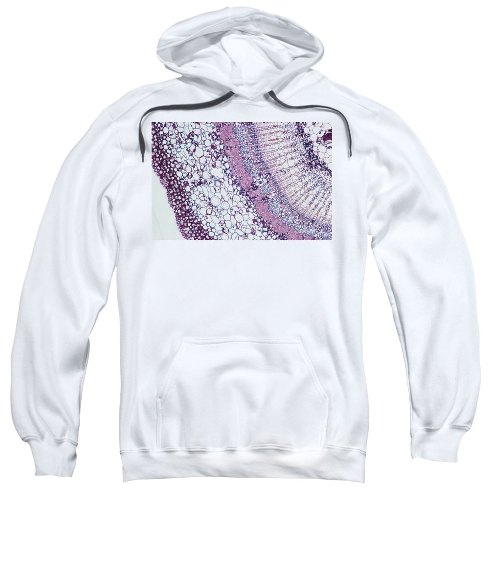 Stem Sweatshirt featuring the photograph Basswood Stem by M. I. Walker