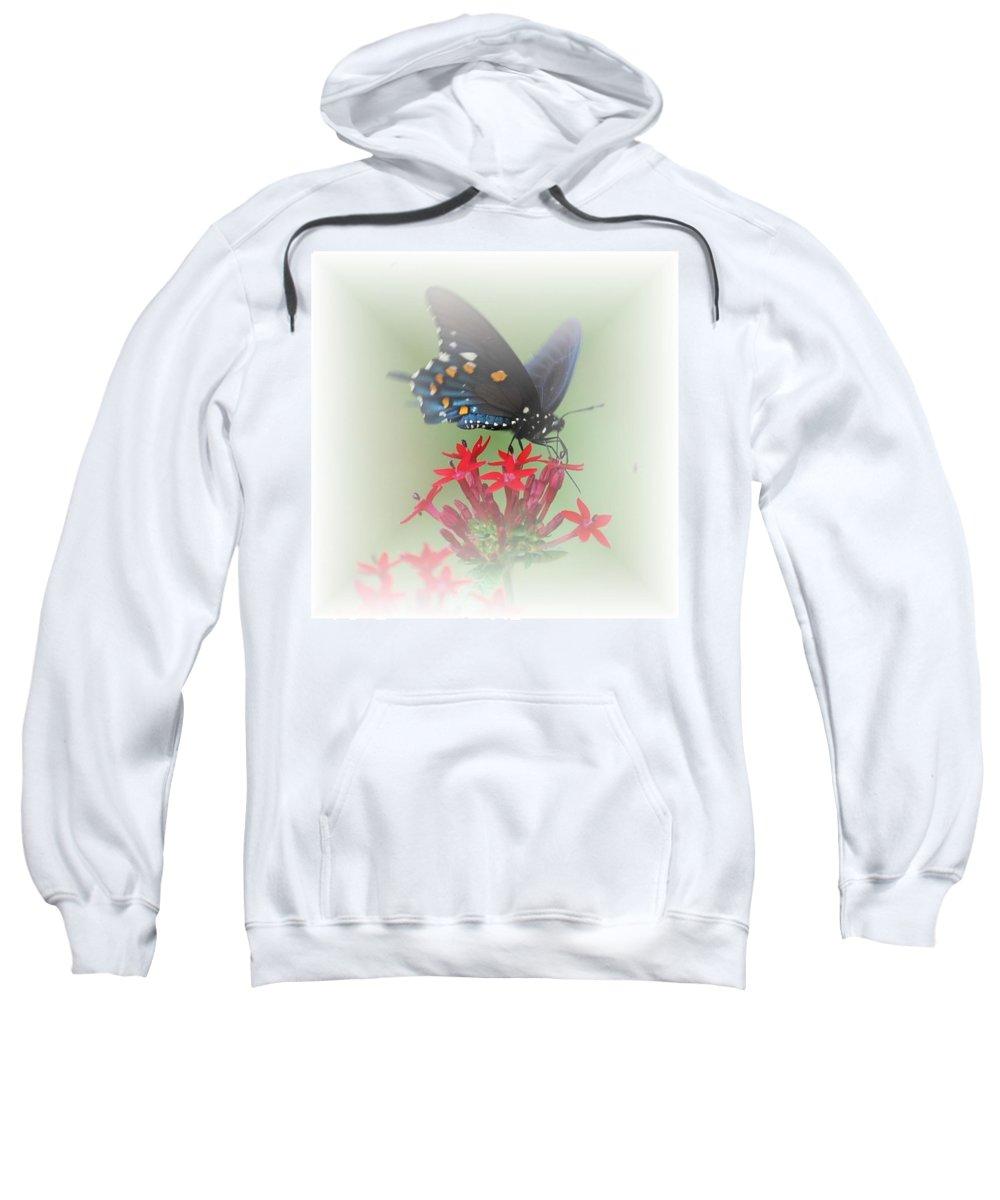 Butterflies Sweatshirt featuring the photograph Beauty Flies by Judy Hall-Folde