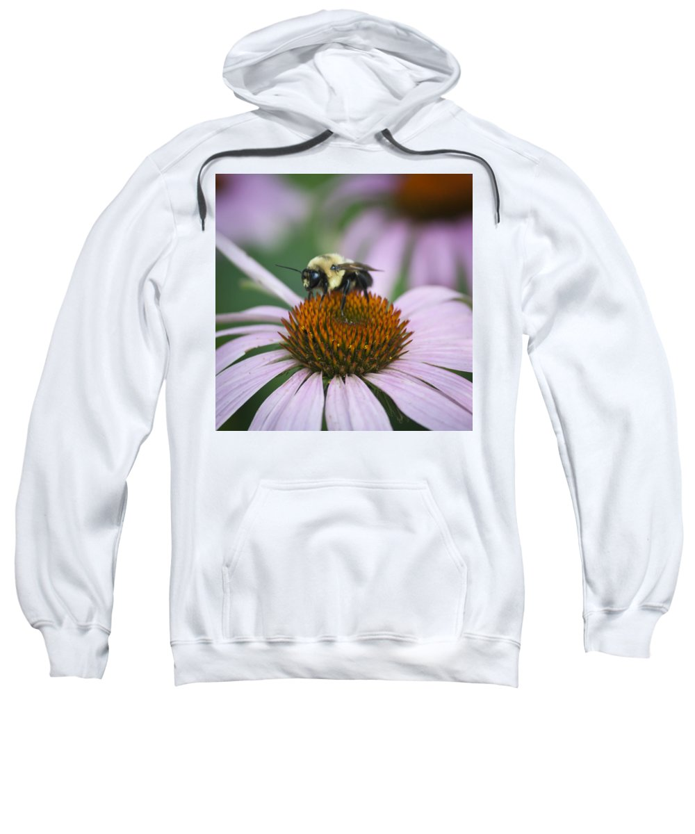 Coneflower Sweatshirt featuring the photograph Bee Resting Squared by Teresa Mucha