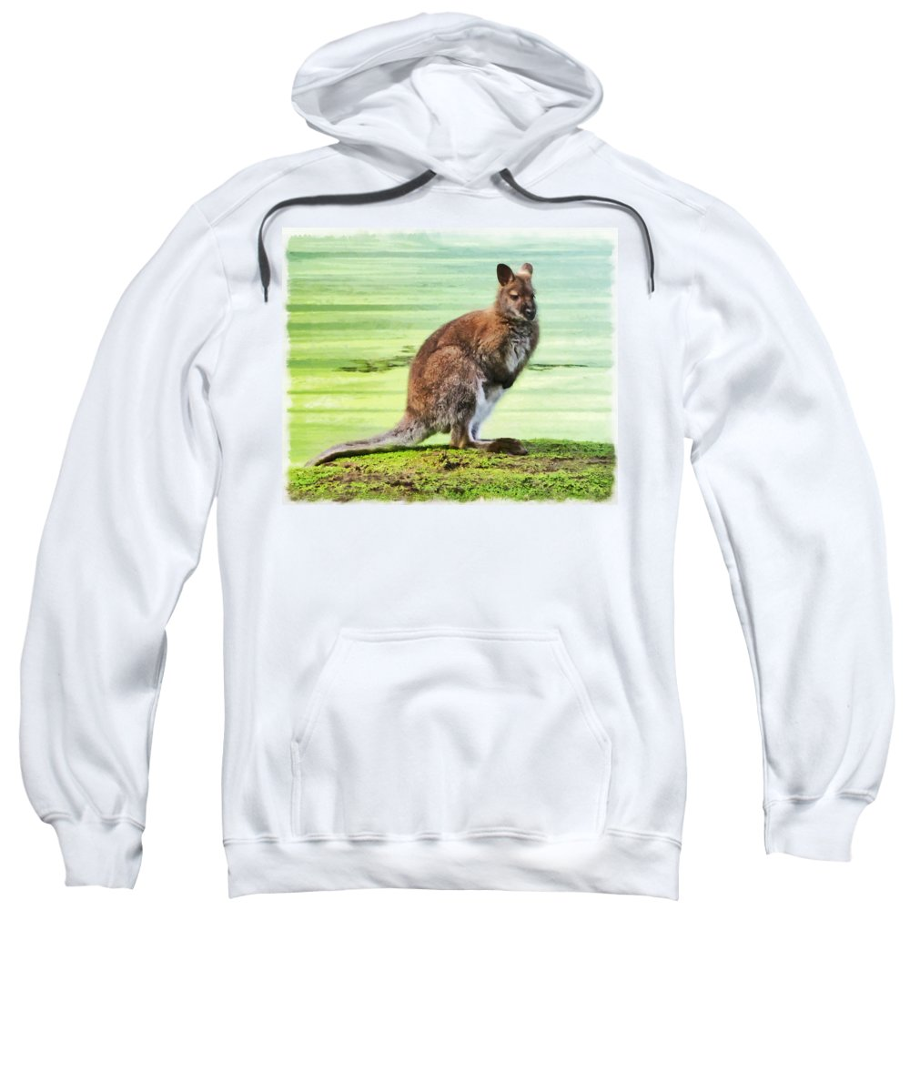 Bennets Wallaby Sweatshirt featuring the photograph Bennets Wallaby by Steve Taylor