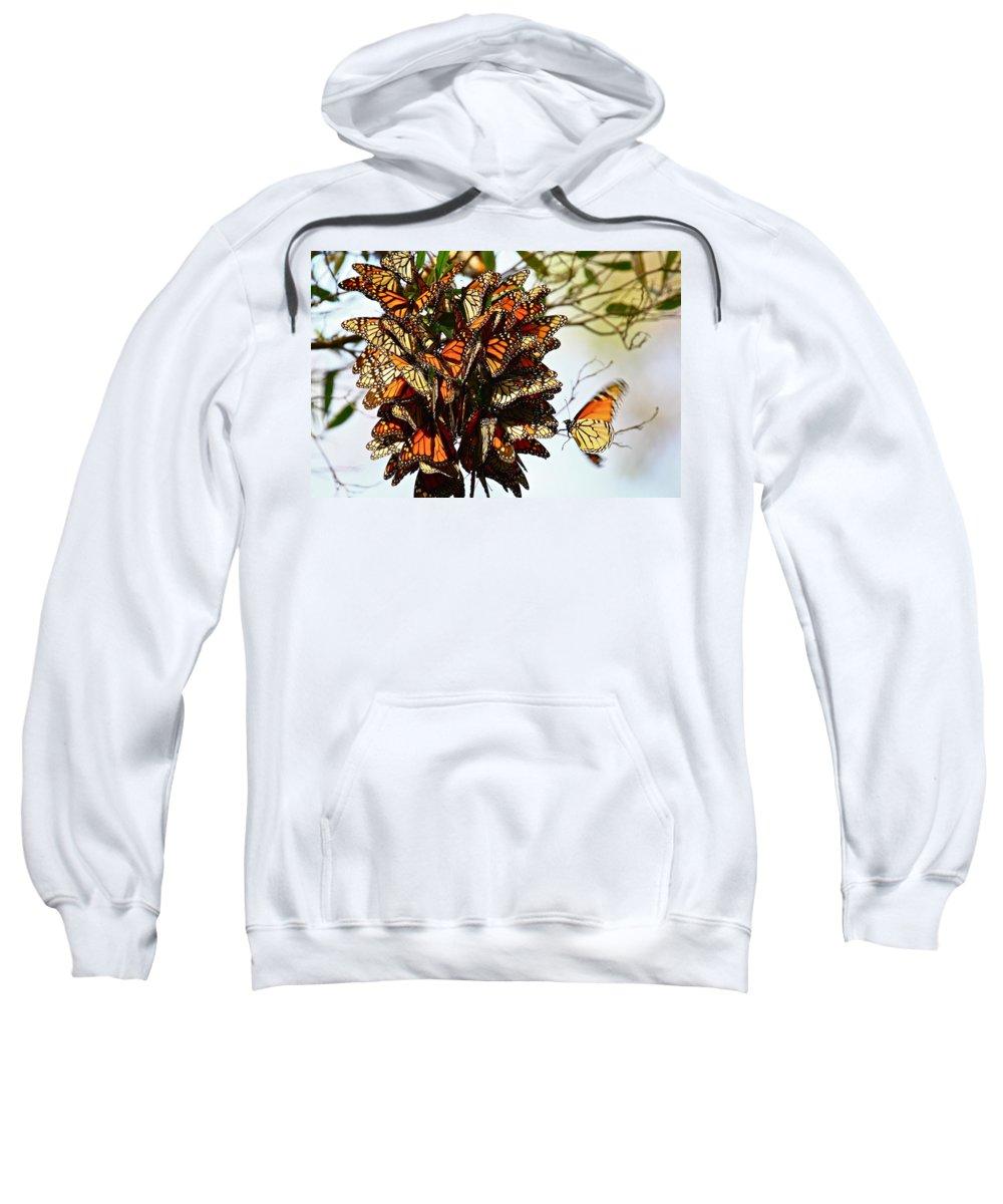 Butterflies Sweatshirt featuring the photograph Bouquet Of Butterflies by Diana Hatcher
