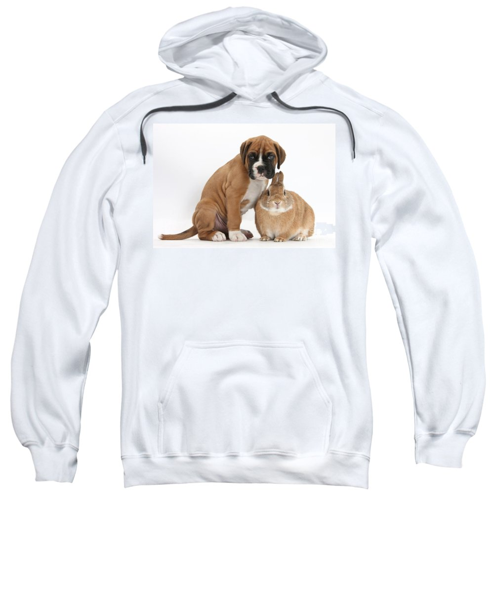 Nature Sweatshirt featuring the photograph Boxer Puppy And Netherland-cross Rabbit by Mark Taylor