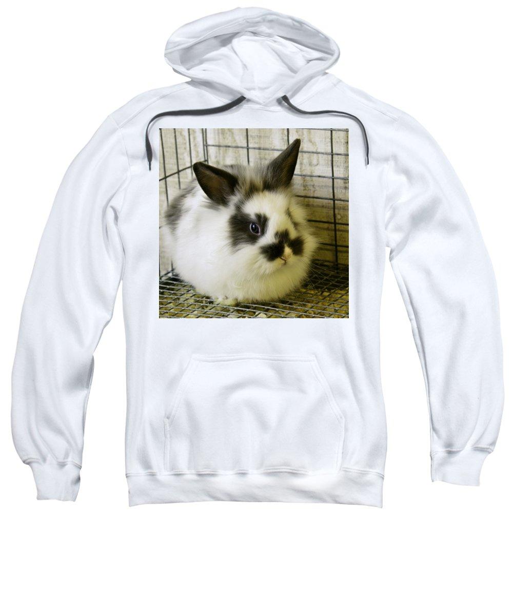 Bunny Sweatshirt featuring the photograph Bunny Love by LeeAnn McLaneGoetz McLaneGoetzStudioLLCcom