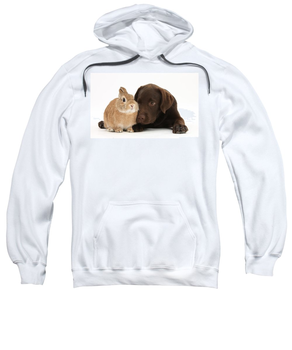 Nature Sweatshirt featuring the photograph Chocolate Labrador Pup by Mark Taylor
