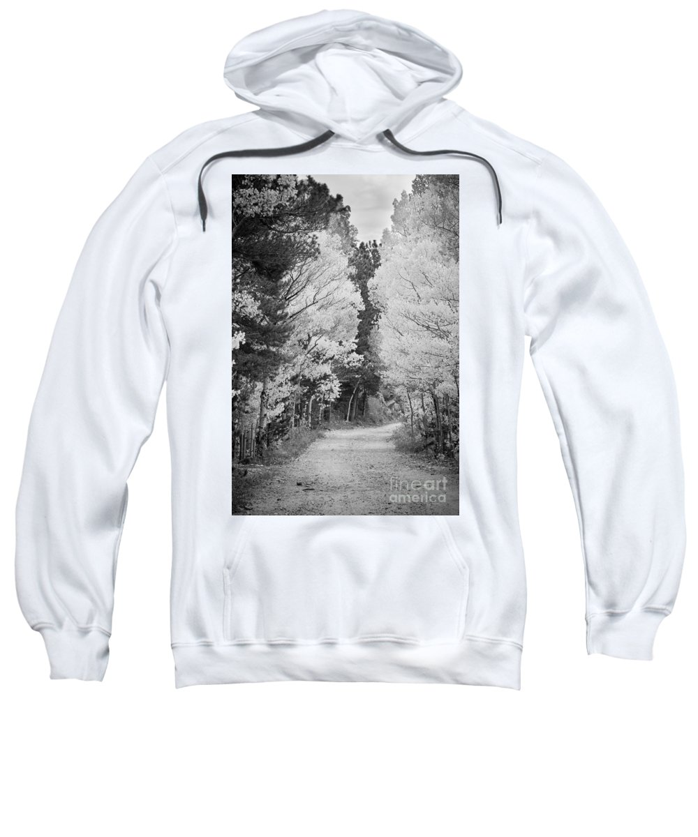 Colorful Sweatshirt featuring the photograph Colorado Rocky Mountain Aspen Road Portrait Bw by James BO Insogna