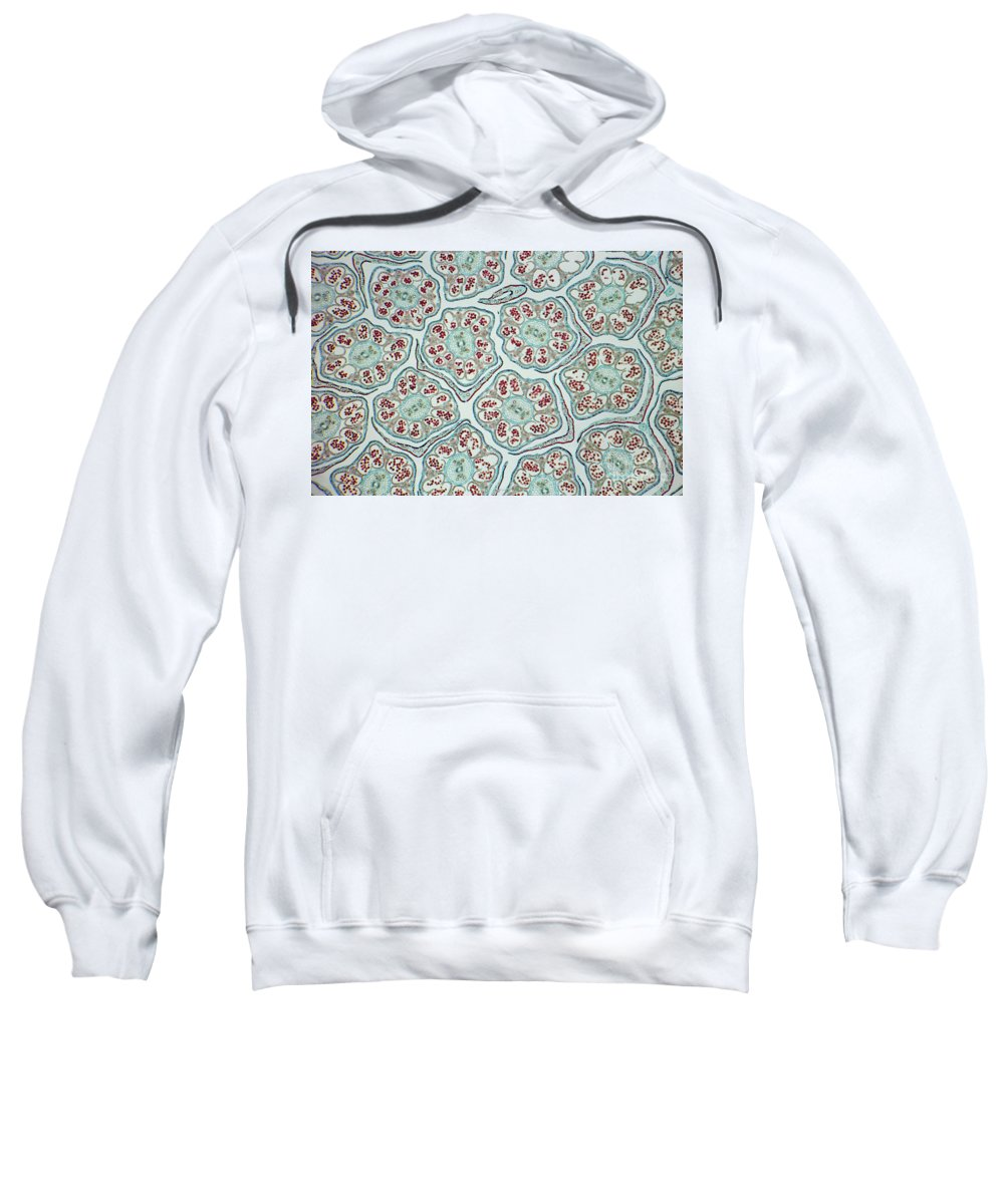 Science Sweatshirt featuring the photograph Cosmos Flower Bud Lm by M. I. Walker